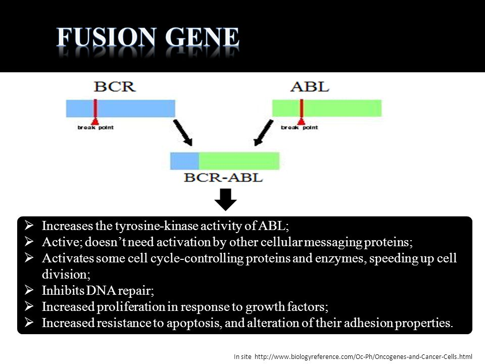 Fusion gene Increases the tyrosine-kinase activity of ABL;
