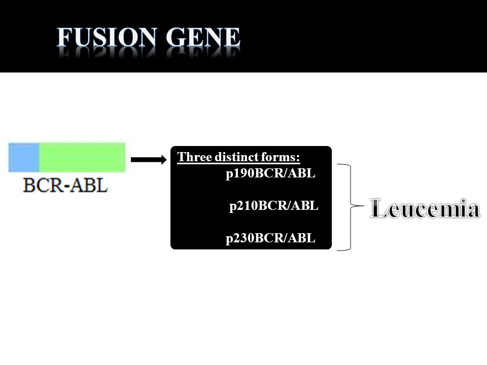 Fusion gene Leucemia Three distinct forms: p190BCR/ABL p210BCR/ABL