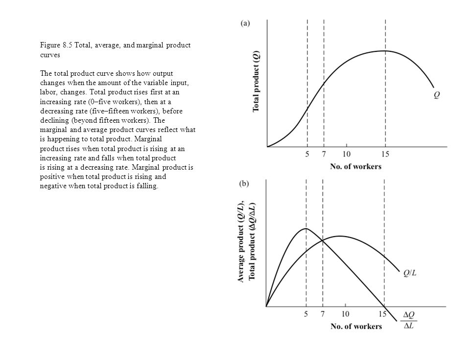 Figure 8.5 Total, average, and marginal product curves The total product curve shows how output changes when the amount of the variable input, labor, changes.