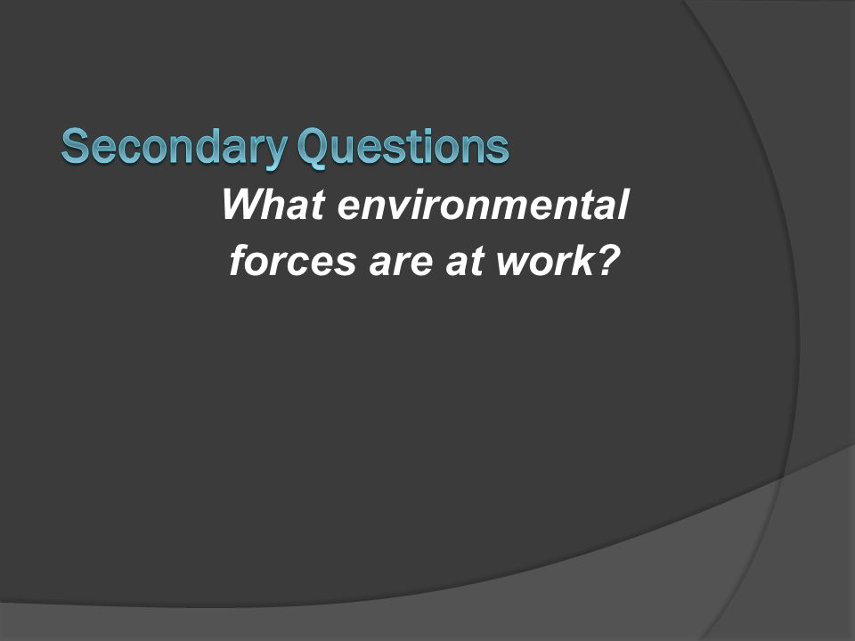 Secondary Questions What environmental forces are at work