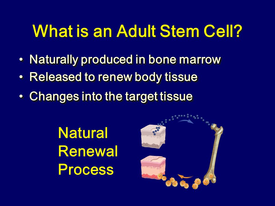 What is an Adult Stem Cell