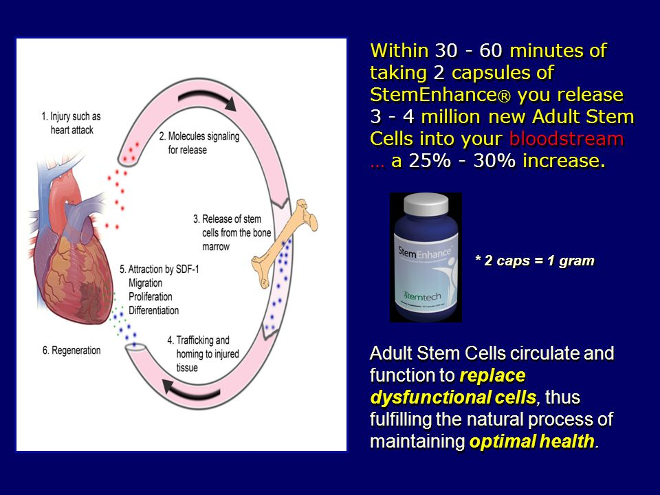 Within 30 - 60 minutes of taking 2 capsules of StemEnhance® you release 3 - 4 million new Adult Stem Cells into your bloodstream … a 25% - 30% increase.