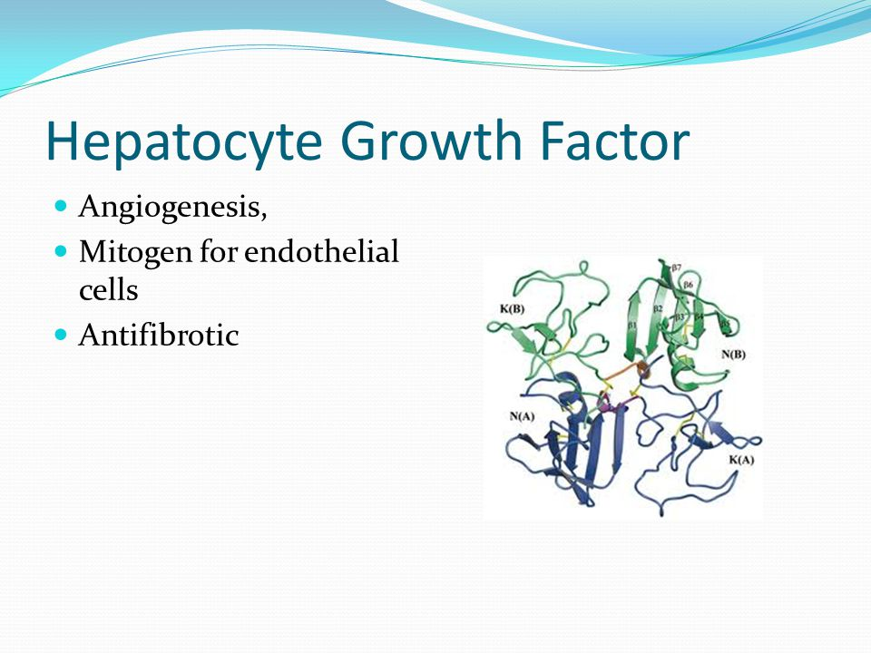 Hepatocyte Growth Factor