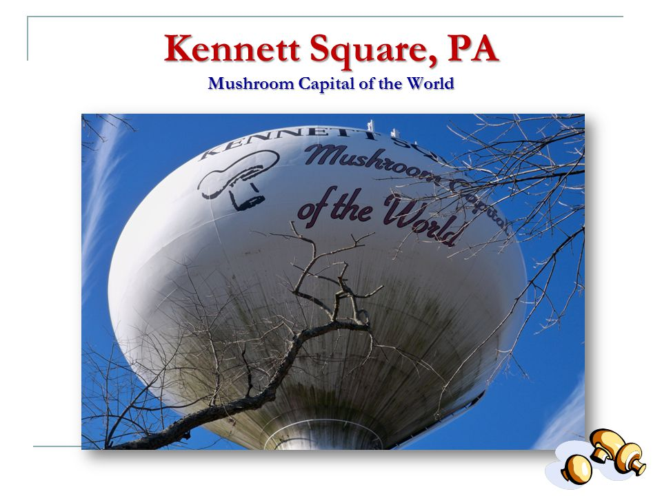 Kennett Square, PA Mushroom Capital of the World