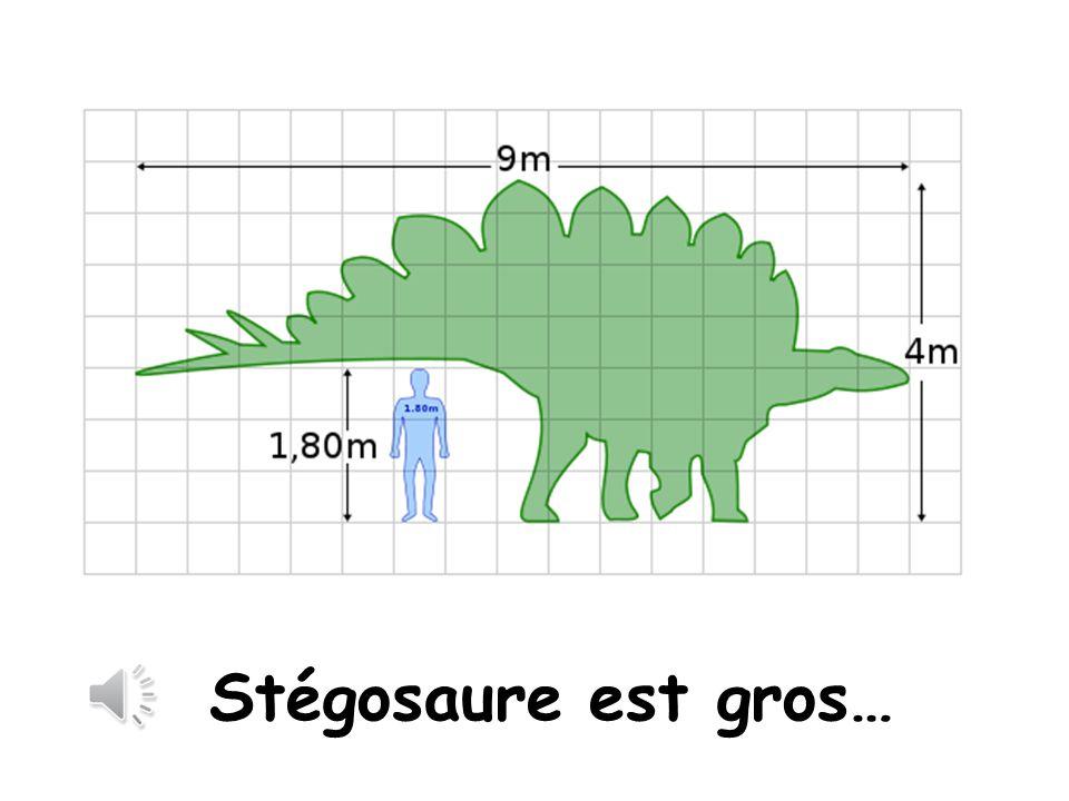Stegosaurus is large Stégosaure est gros…