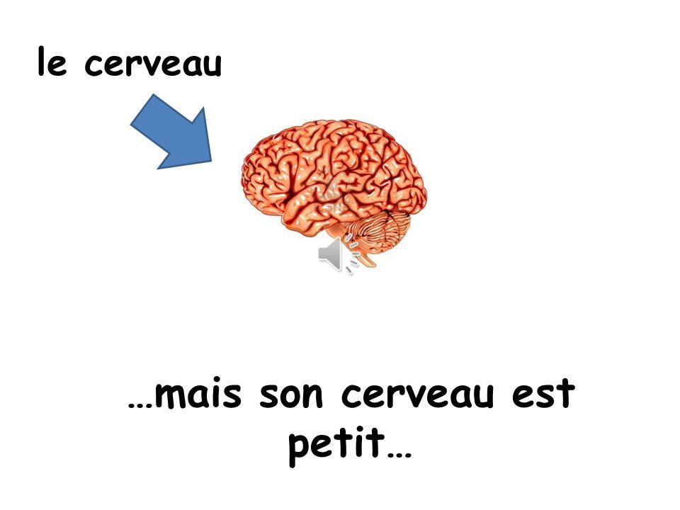 …mais son cerveau est petit…