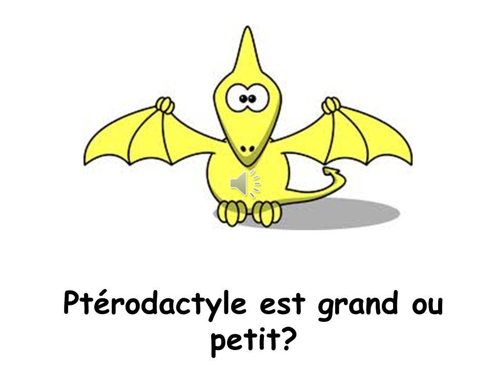 Ptérodactyle est grand ou petit