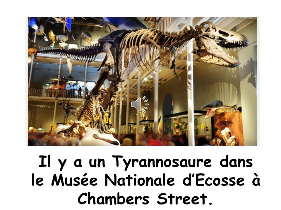 Il y a un Tyrannosaure dans le Musée Nationale d'Ecosse à Chambers Street.