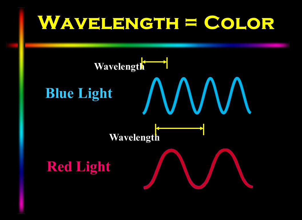 Wavelength = Color Blue Light Red Light Wavelength Wavelength
