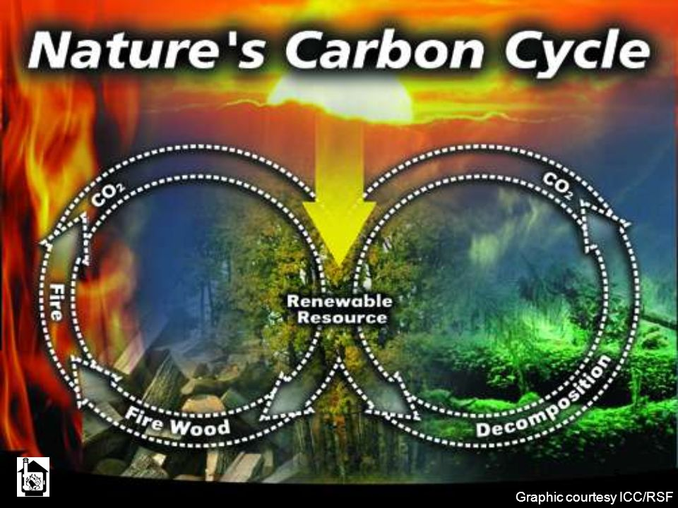 Right circle: Trees absorb CO2 when they grow and release it when they die and decompose