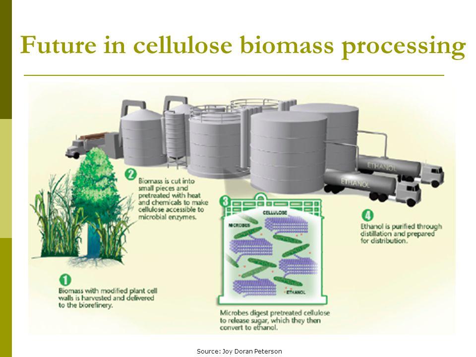 Future in cellulose biomass processing