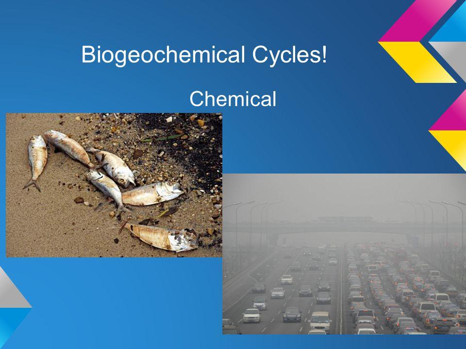 Biogeochemical Cycles!