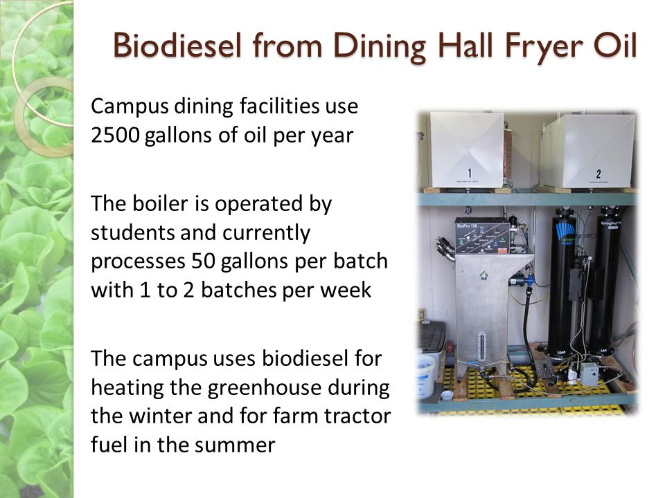 Biodiesel from Dining Hall Fryer Oil