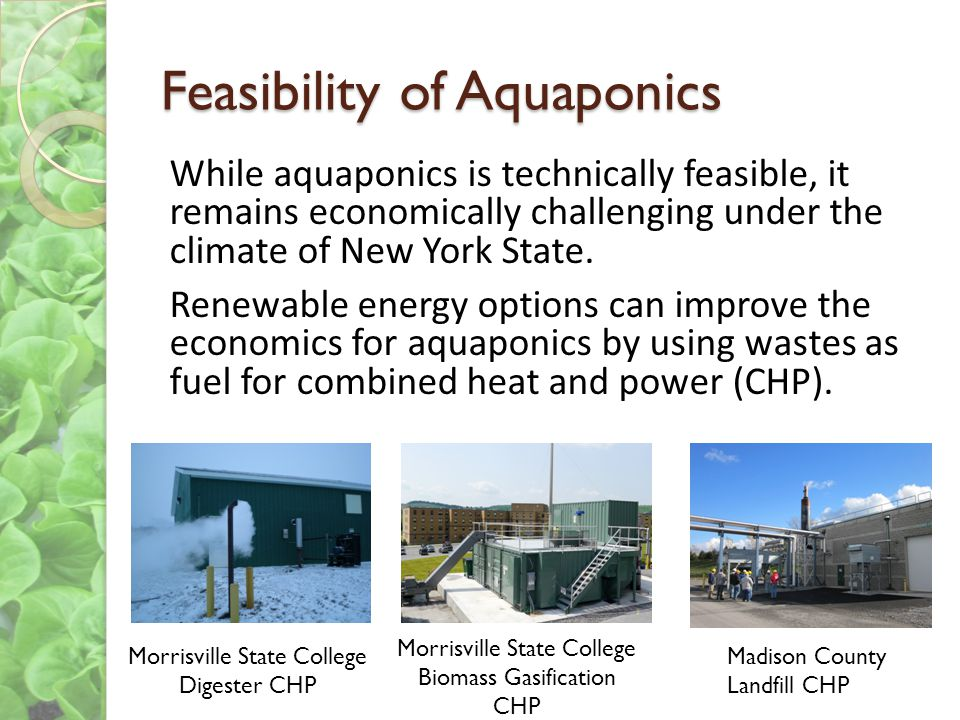 Feasibility of Aquaponics