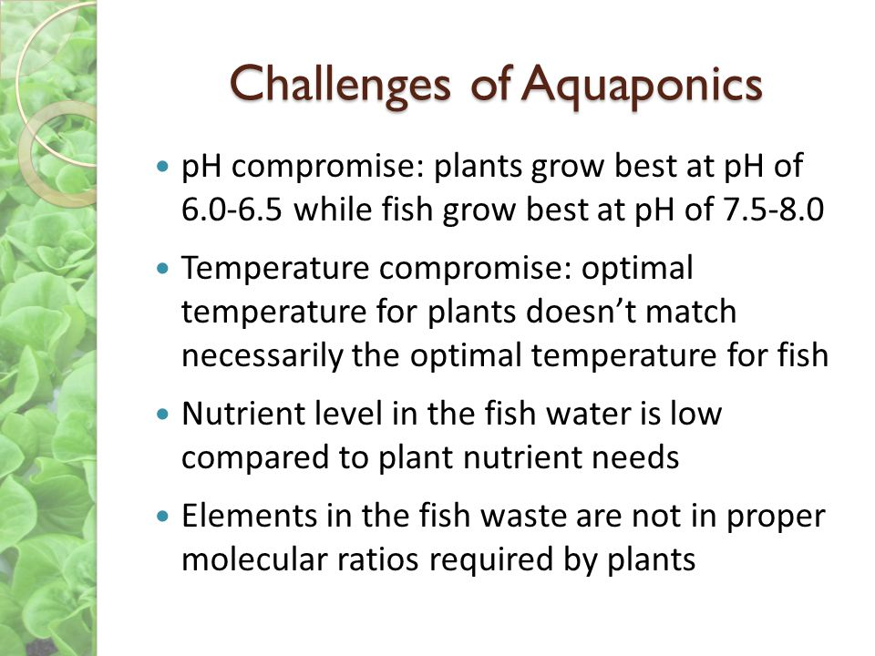 Challenges of Aquaponics