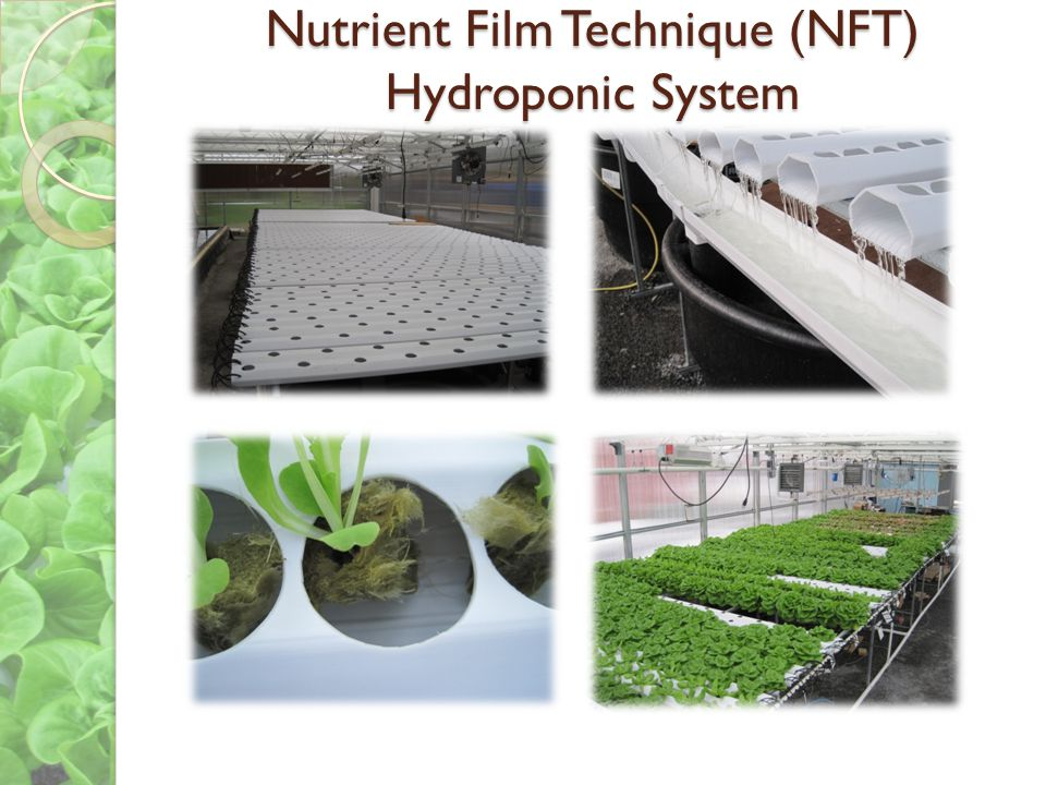 Nutrient Film Technique (NFT) Hydroponic System