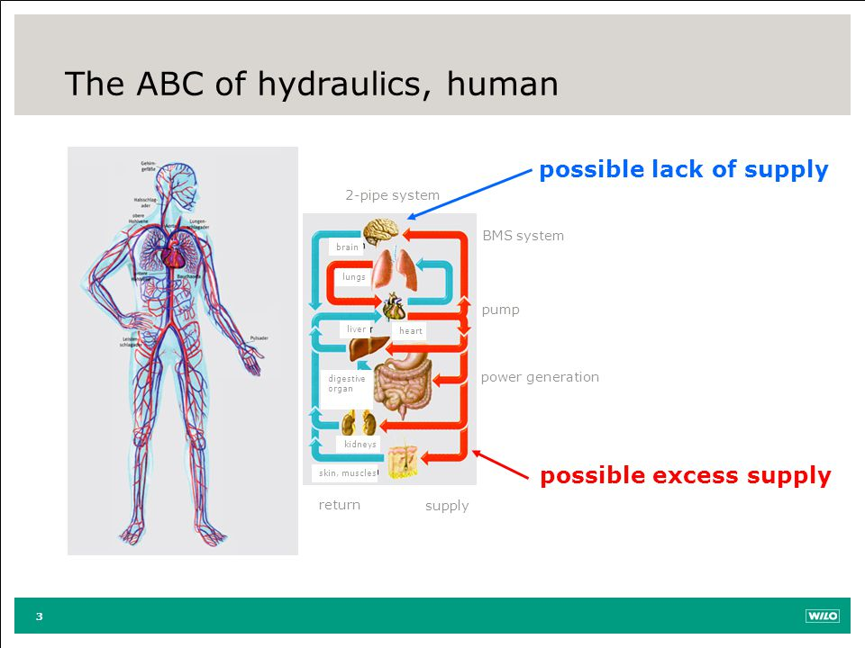 The ABC of hydraulics, human