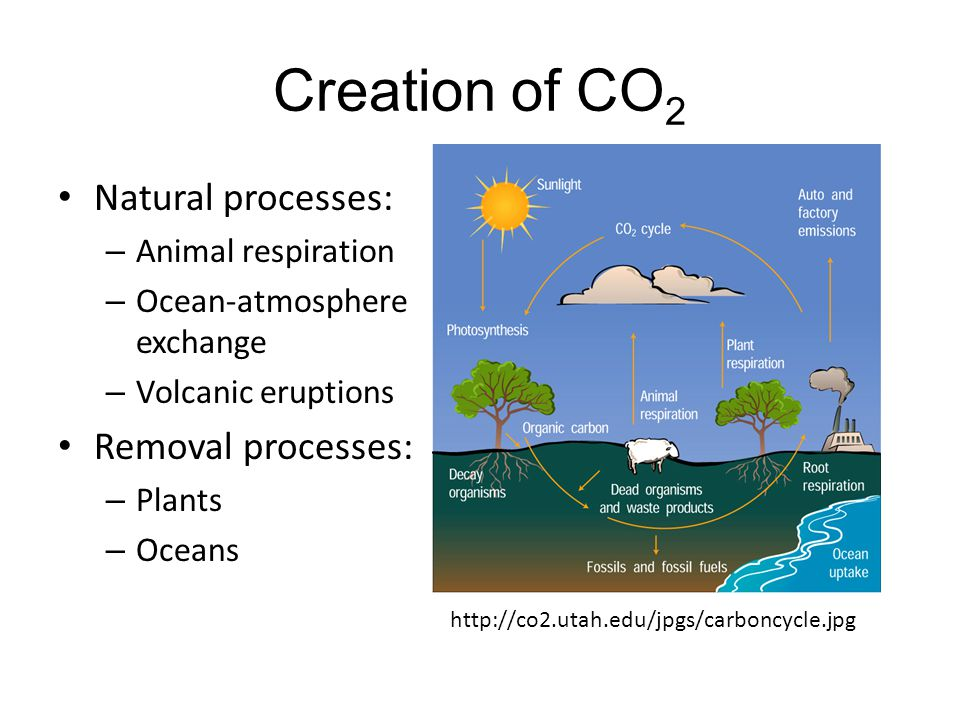 Creation of CO2 Natural processes: Removal processes: