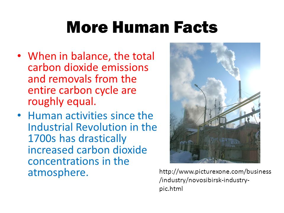 More Human Facts When in balance, the total carbon dioxide emissions and removals from the entire carbon cycle are roughly equal.