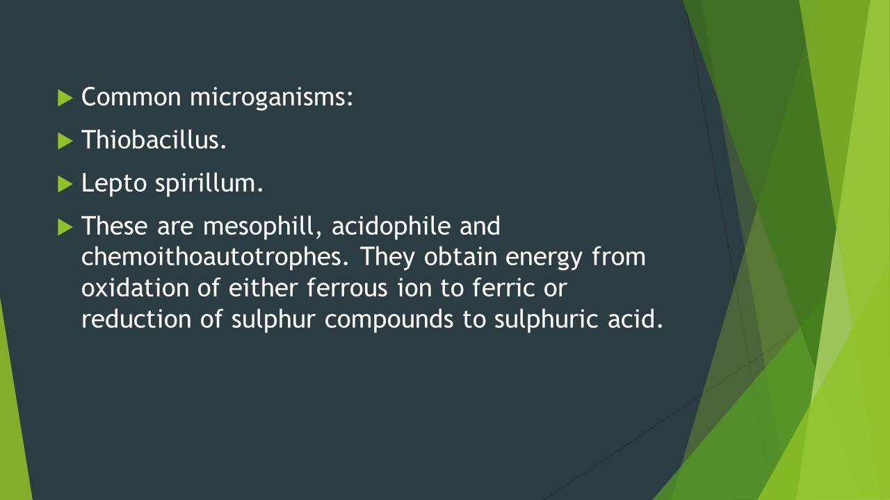 Common microganisms: Thiobacillus. Lepto spirillum.