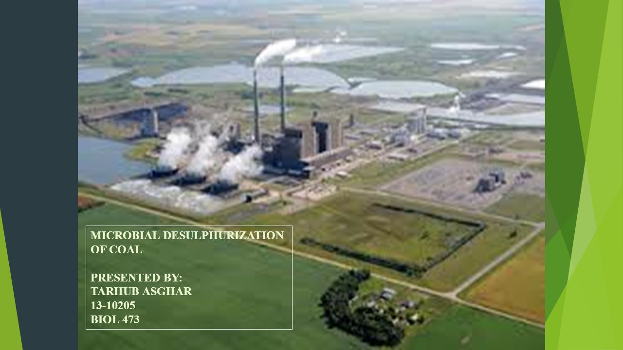MICROBIAL DESULPHURIZATION OF COAL