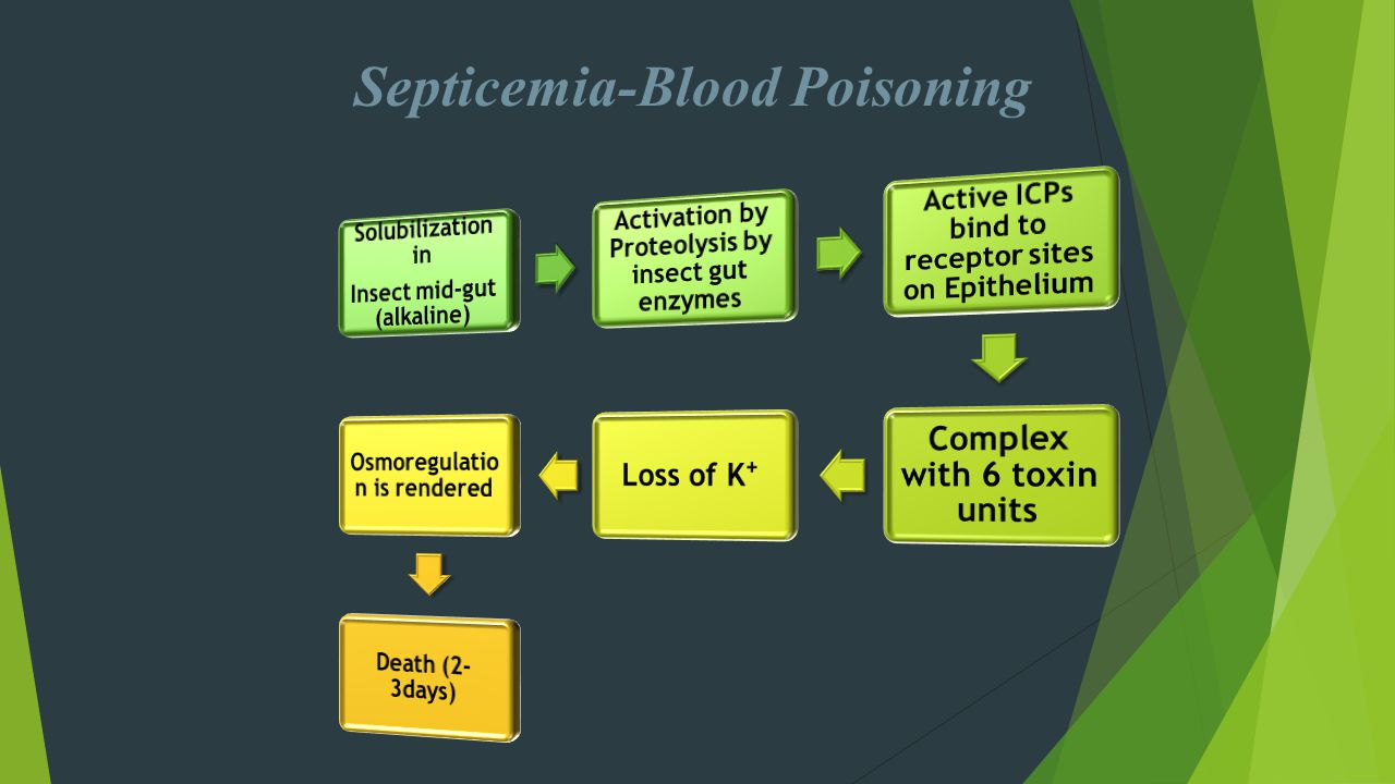 Septicemia-Blood Poisoning