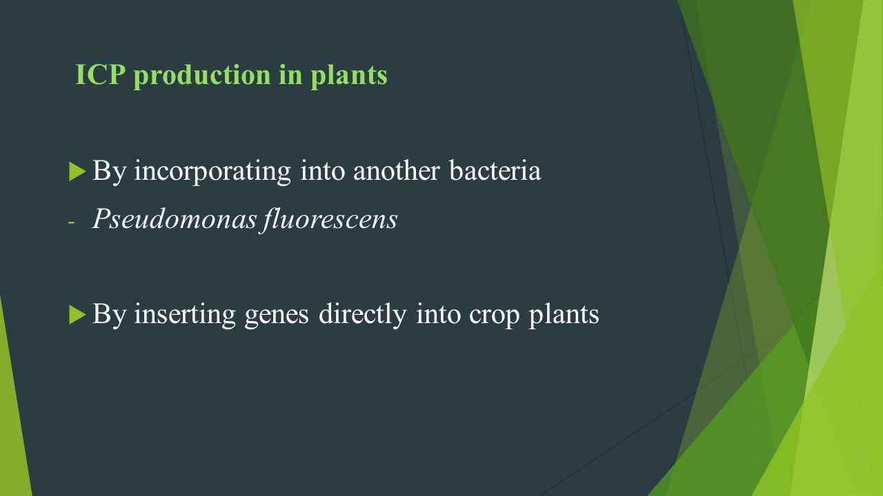 ICP production in plants