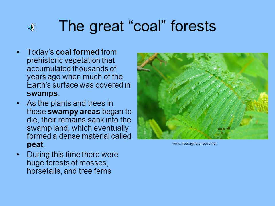 The great coal forests