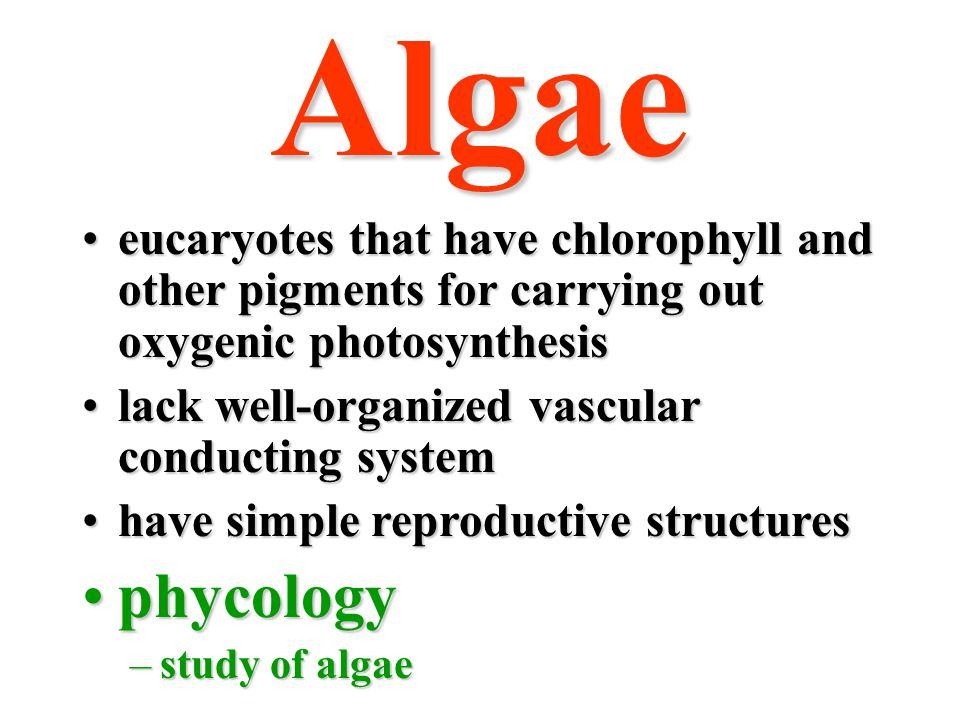 Algae eucaryotes that have chlorophyll and other pigments for carrying out oxygenic photosynthesis.