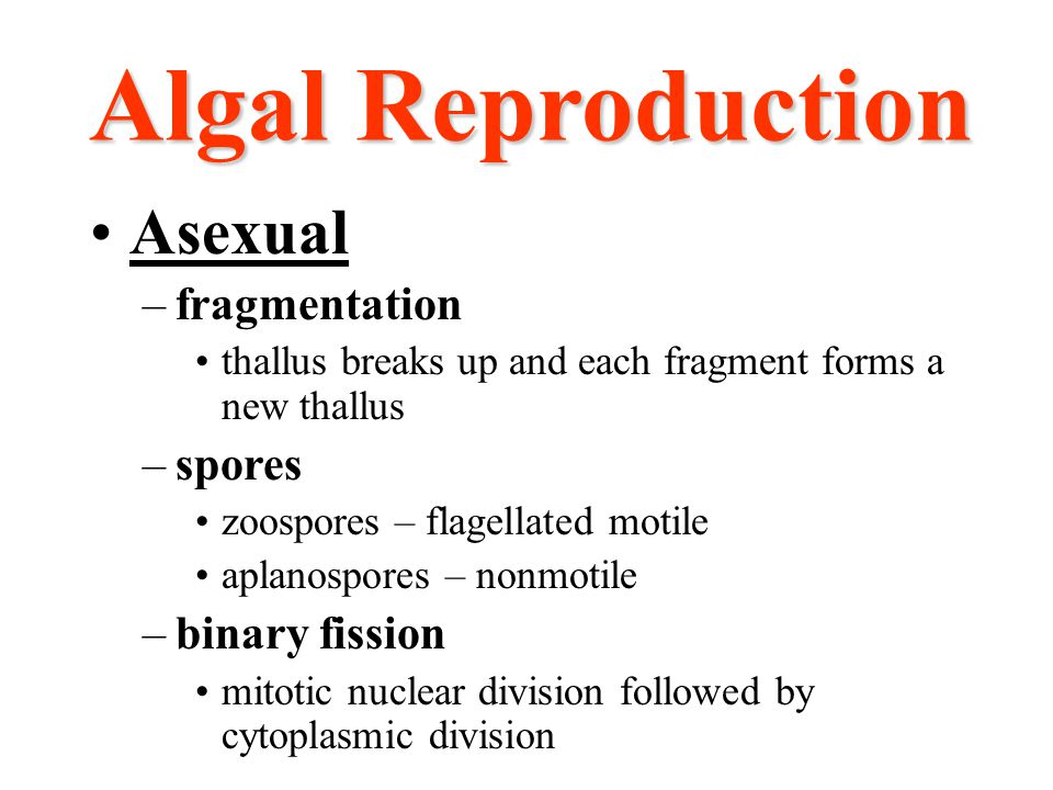 Algal Reproduction Asexual fragmentation spores binary fission