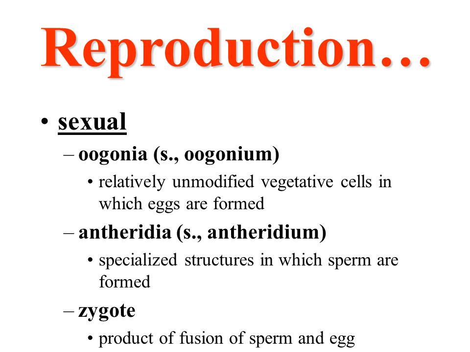 Reproduction… sexual oogonia (s., oogonium)
