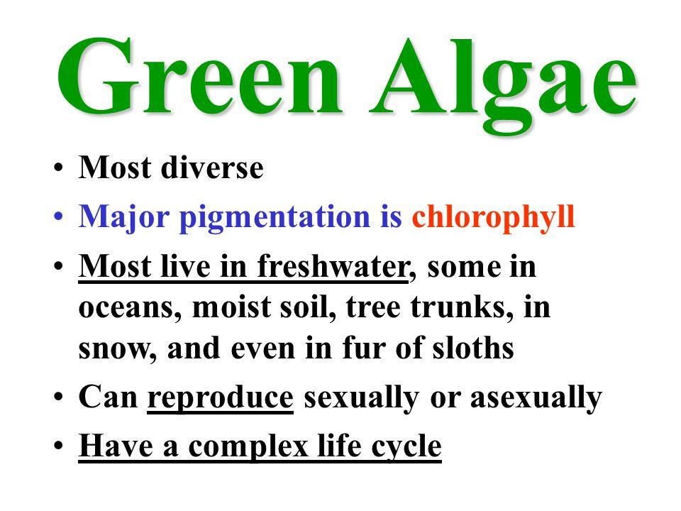 Green Algae Most diverse Major pigmentation is chlorophyll