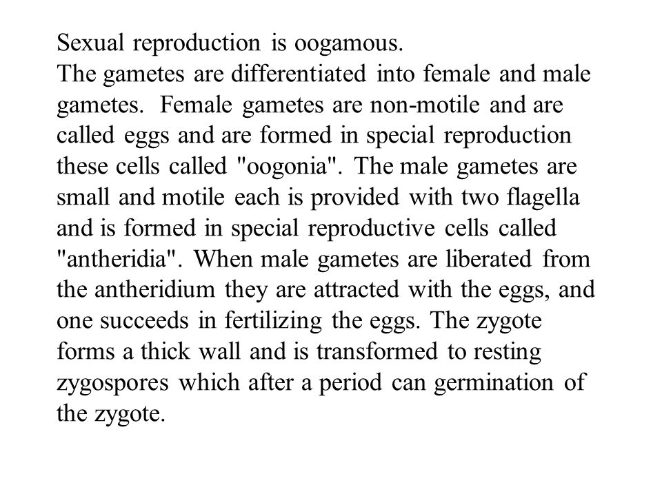 Sexual reproduction is oogamous