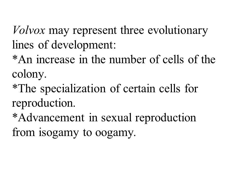 Volvox may represent three evolutionary lines of development:
