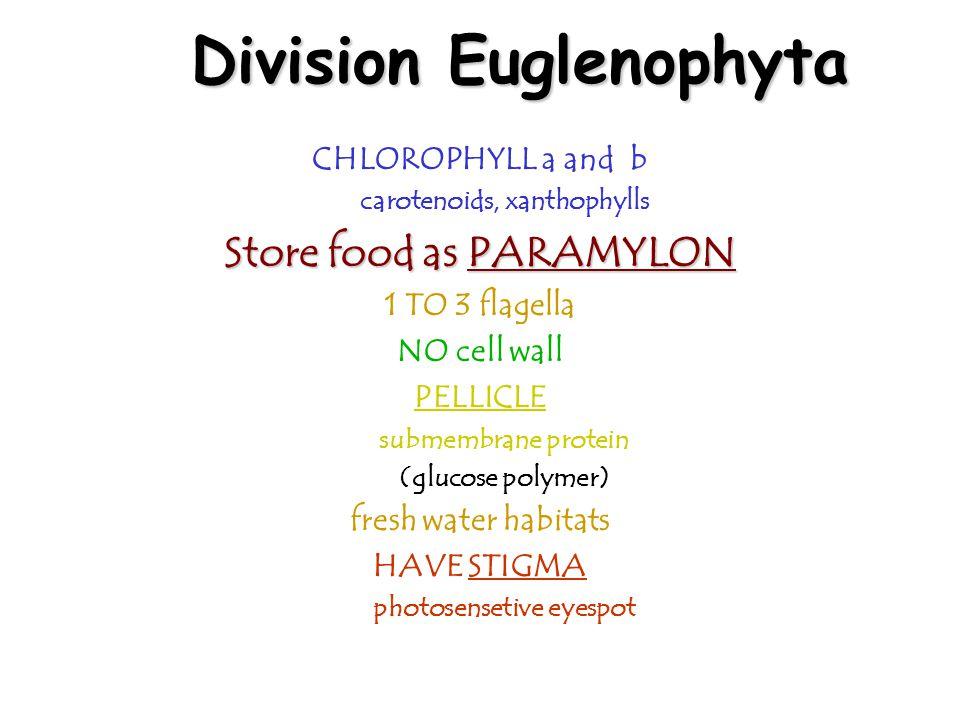 Division Euglenophyta