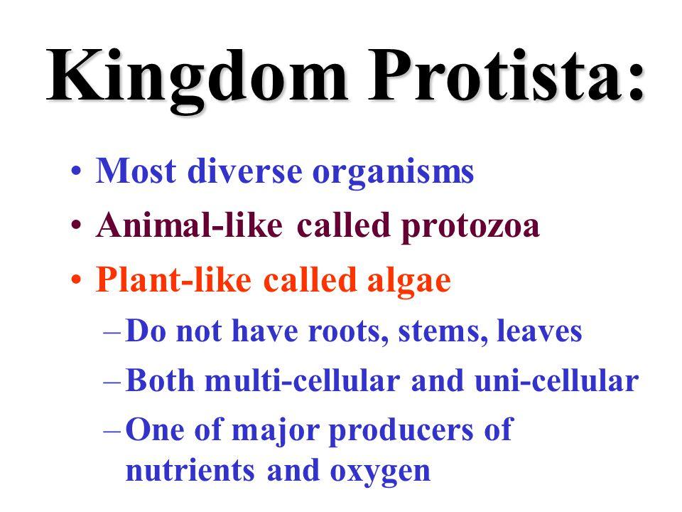 Kingdom Protista: Most diverse organisms Animal-like called protozoa