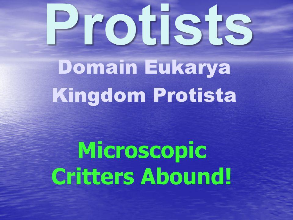 Domain Eukarya Kingdom Protista