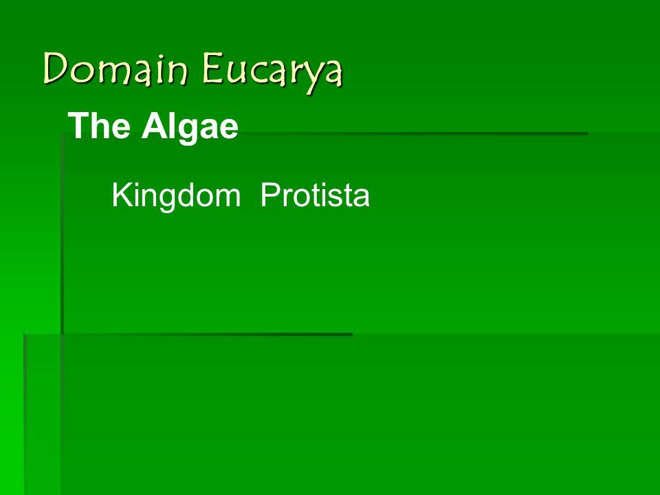 Domain Eucarya The Algae Kingdom Protista