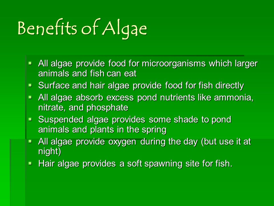 Benefits of Algae All algae provide food for microorganisms which larger animals and fish can eat.
