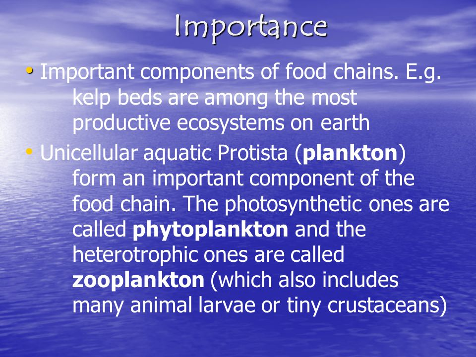 Importance Important components of food chains. E.g. kelp beds are among the most productive ecosystems on earth.