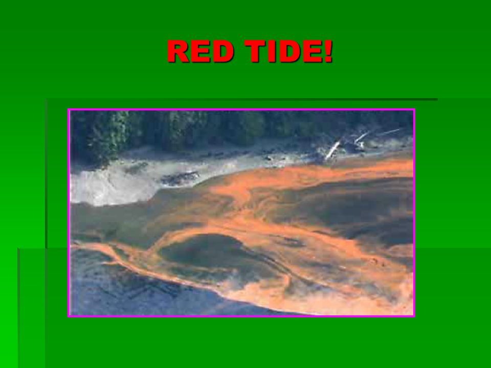 RED TIDE!