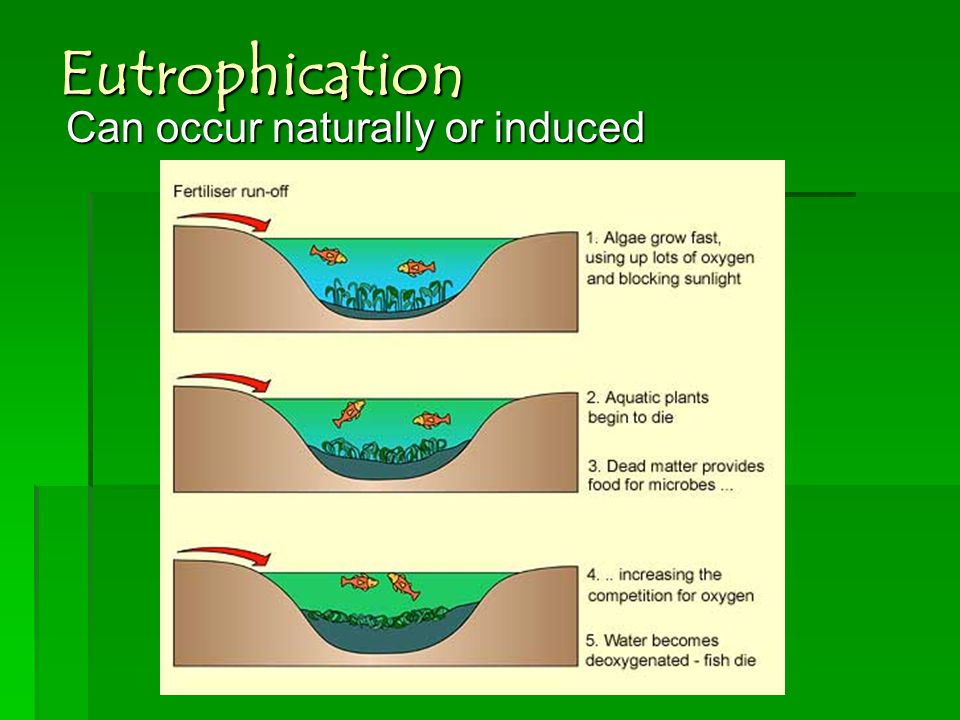 Eutrophication Can occur naturally or induced