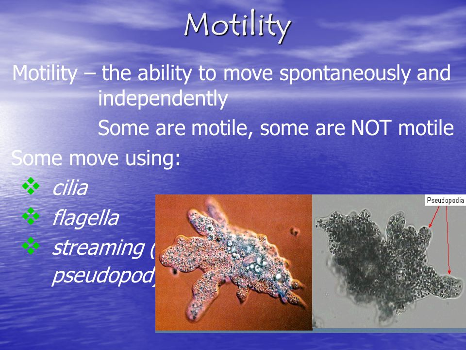 Motility Motility – the ability to move spontaneously and independently. Some are motile, some are NOT motile.