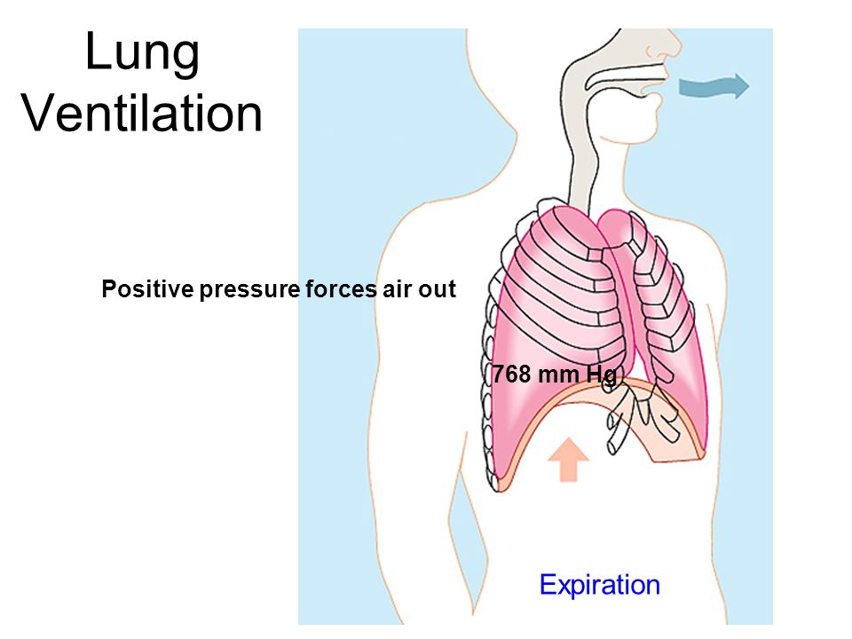 Lung Ventilation Positive pressure forces air out 768 mm Hg Expiration