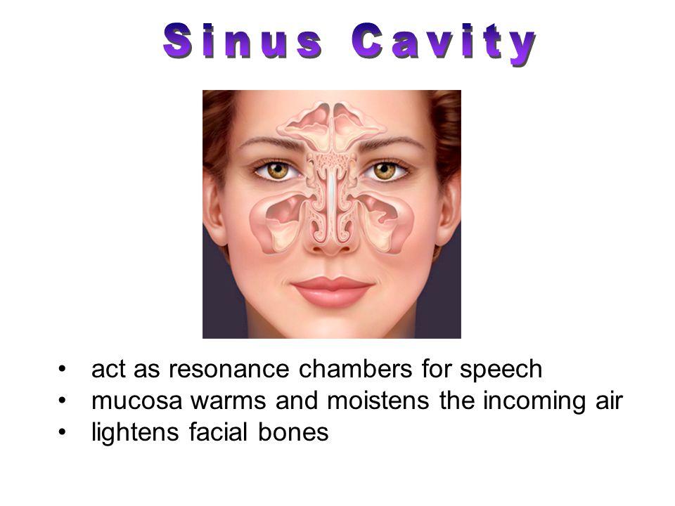 Sinus Cavity act as resonance chambers for speech