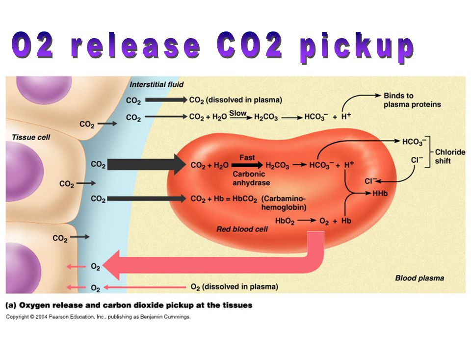 O2 release CO2 pickup