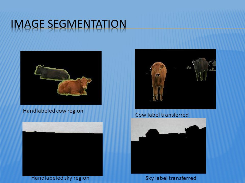 Image Segmentation Handlabeled cow region Cow label transferred