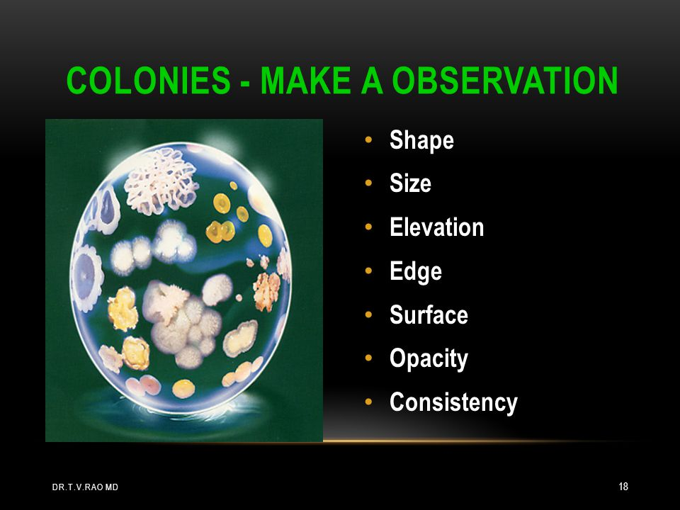 Colonies - Make a Observation