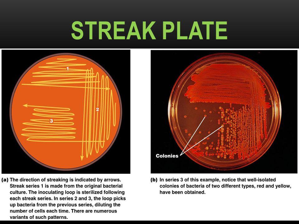 Streak Plate Dr.T.V.Rao MD Figure 6.10a–b