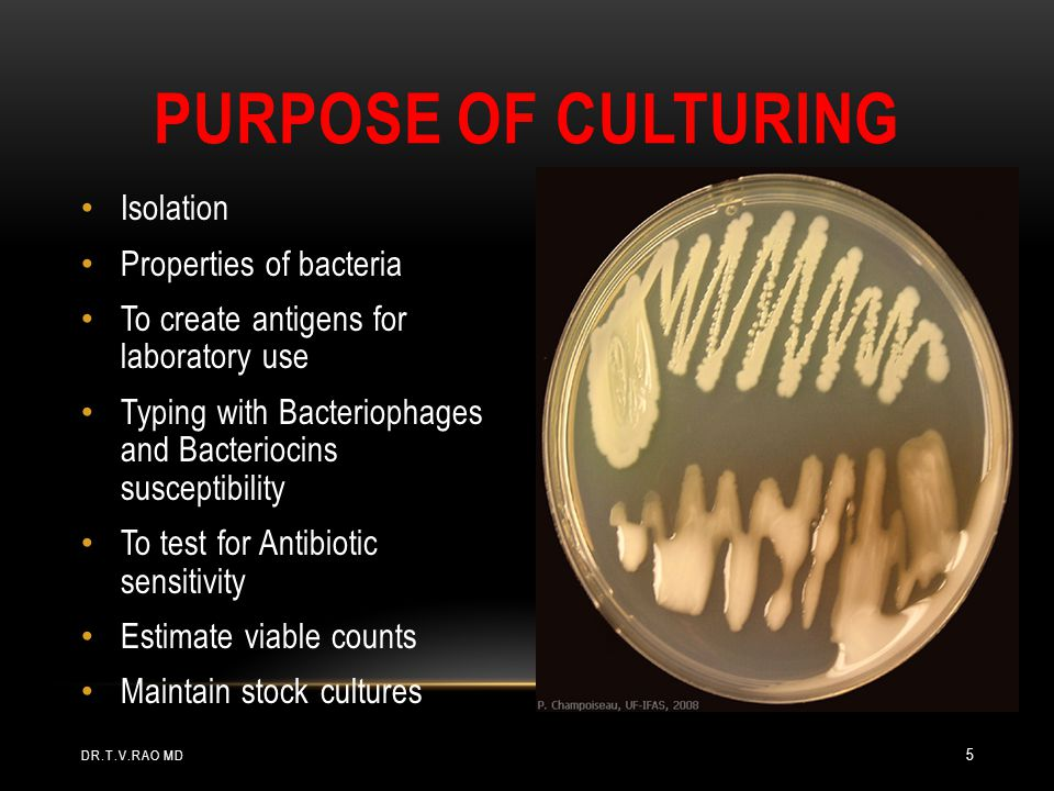 Purpose of Culturing Isolation Properties of bacteria
